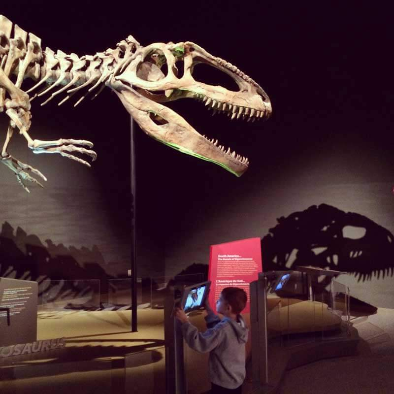 sciencecenter-dinosaur