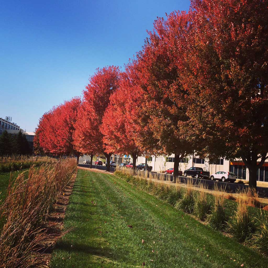 Fall Ombre Trees, Des Moines, IA