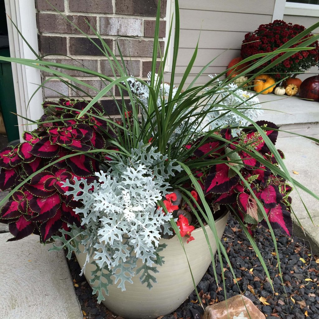 container-garden-fall-growth-square-min