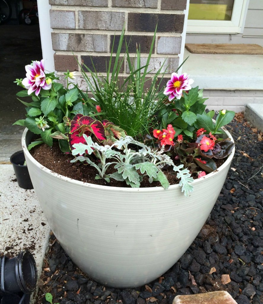 container-garden-planted-front-min